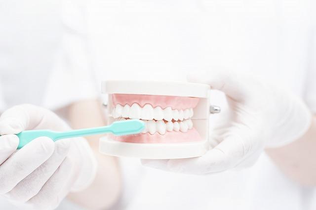 歯垢をしっかり除去する